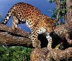 South Africa June 2018 Leopardth